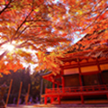 びわ湖テラス絶景の紅葉絨毯と美しい石積みの街並「坂本」散策
