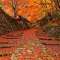 ~ぐるっと琵琶湖を1周~滋賀人気の紅葉名所めぐり