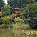 《関西花の寺25ヶ所巡り》【第3回(15・16・17番)】スイレン・キキョウ・サルスベリ