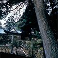 【14名様限定】天空の聖地・玉置神社と源泉掛け流し!絶品の湯「十津川温泉」でほっこり温泉入浴と旬の味覚を味わう郷土料理の昼食