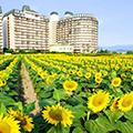 ◆琵琶湖湖畔に広がる絶景◆ひまわりの田園風景&水辺に浮かぶ幻想的な佐川美術館で美術鑑賞と琵琶湖ミシガンクルーズ