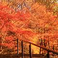 平安神宮「神苑」の紅葉観賞&時代祭館でお買い物