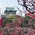 大阪・梅の名所で観梅・盆梅・梅三昧 大阪城の梅林と大阪天満宮・大盆梅展と目の前で調理するライブメニューが人気のランチバイキングの昼食
