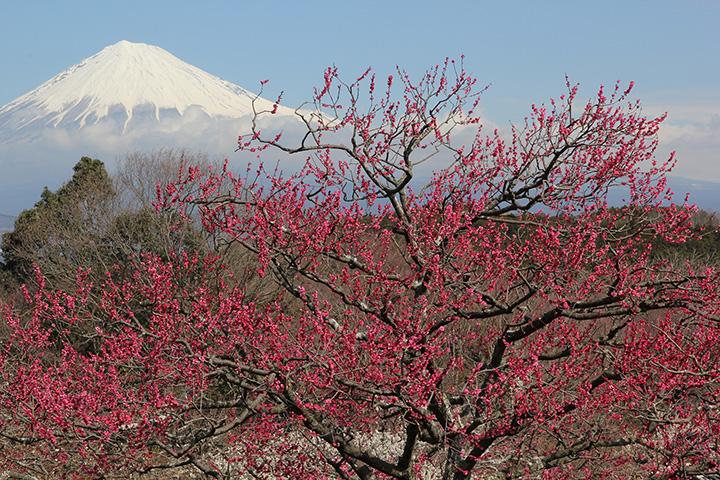岩本山公園(提供:富士市)