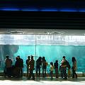 """【中紀バスドライバーおすすめ企画】""""須磨海浜水族園""""で心に刻む感動体験と""""神戸メリケンパークオリエンタルホテル""""で大人気の中華バイキングで満腹・大満足の旅"""
