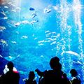 「京都水族館」×「京都鉄道博物館」~見て・触って・感じるマナビエンターテイメント~